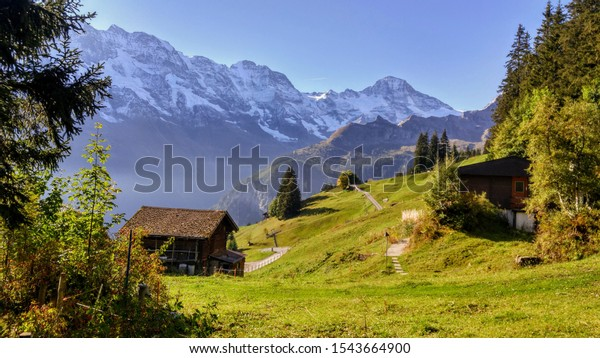 green-alpine-meadow-wooden-hut-600w-1543