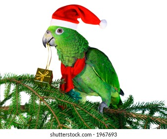 Green amazon parrot holding a golden gift parcel