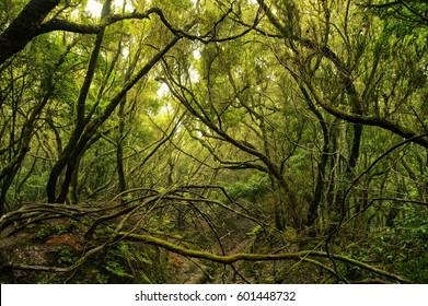 Green anaga rain-forest