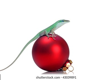 A green anole is sitting on a red Christmas bulb. White background.