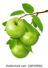Green Apple isolated. Three ripe juicy apples on  branch with leaves isolated on white background as package design