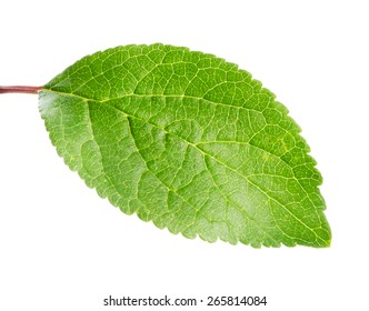 Green apple leaf