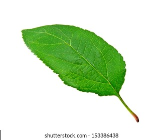 Green apple leaf on white background