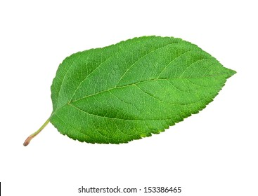 Green apple leaf on white background