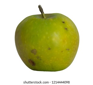 A green apple, natural and unsprayed.