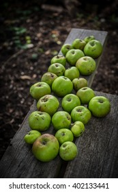 Green apples from allotment.