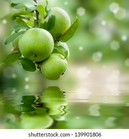 Green apples on a branch ready to be harvested reflection in water, outdoors, selective focus