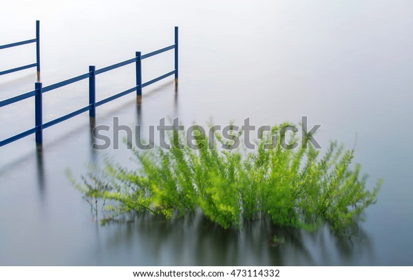 Green Aquatic plants growing in the water reservoir - Slovak Republic.