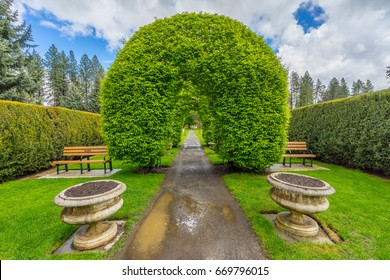 Green arch of trees in the park. Manito Park and Botanical Gardens, Spokane, Washington, United States