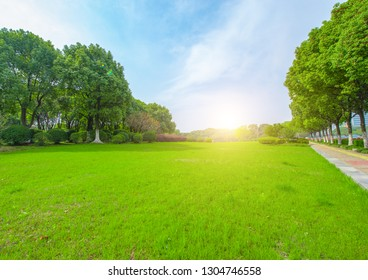 Green areas and woods in city parks