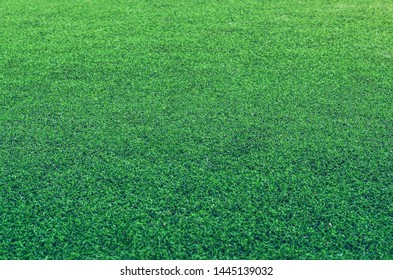 Green artificial grass to cover sports fields. Natural imitation background.