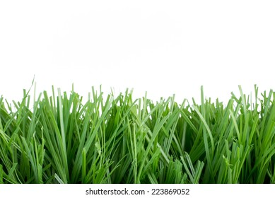 Green artificial grass on White Background