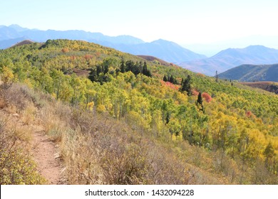 Green Aspen trees mix with Yellow aspens in the Wasatch Mountains of Utah early in the fall season.