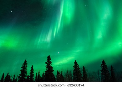 Green aurora bands over trees