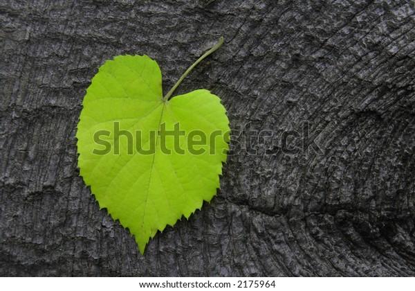 Green Autumn Leaf on Wood