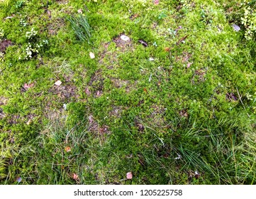Green autumn moss in forest. Autumn forest green moss top view. Green moss forest top view. Forest moss background