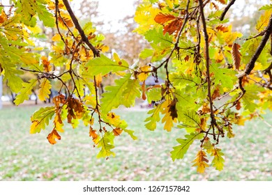 green  autumnal leaves on the sunny day with blue sky on the background, note shallow depth of field
