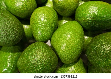 green avocados in the market