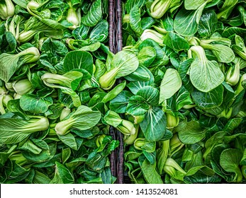 Green Baby Bok Choy or Known as Chinese Cabbage. Mini Shanghai Bok Choy or Pak Choi. Brassica rapa chinensis