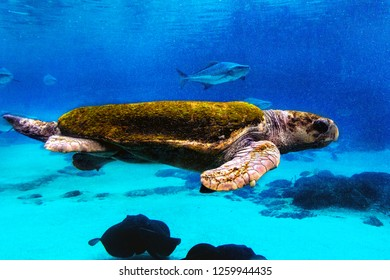 green back turtle in the ocean aquarium