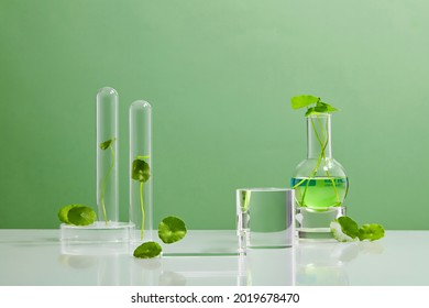 Green Background Centella asiatica for Biological experiment presentation Centella asiatica leaves, green water in biological test tubes. Production of cosmetics based on Centella asiatica. Showcase