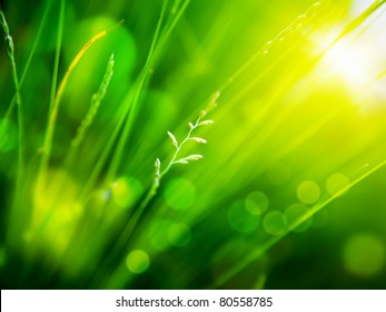 green background  with color bokeh