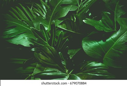 Green background concepts.Tropical palm leaves, jungle leaf close up