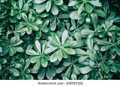 Green background with fresh leaves. Vintage style