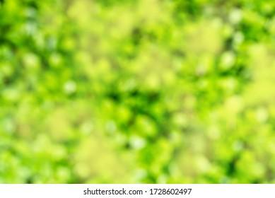 Green background, fresh summer grass, defocus blur.Nature background.Element of design