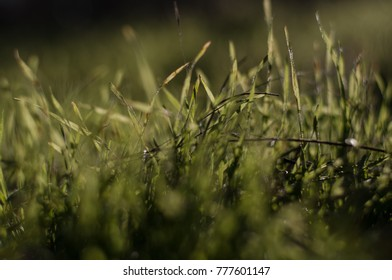 Green background with grass leaves with blurred background