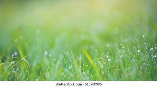 Green background image of nature - grass, flowers, sprout, nature, morning, dew.