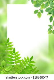 Green background with leaves and blank white surface for text