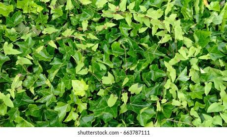 Green background, nature, leaves, leaf