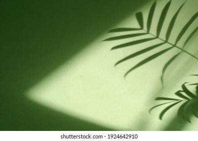 Green background with shadow of palm leaves. Ecology, nature, purity and authenticity concept. Texture template for design, mock up, wallpaper, poster, banner, announcement, invitation, greeting card. - Shutterstock ID 1924642910