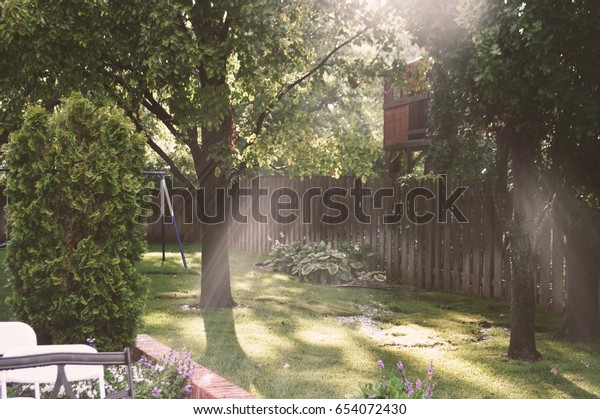 Green Backyard with Rays of Sunlight