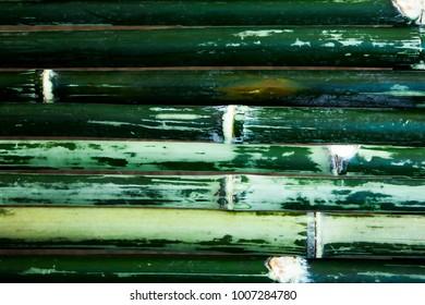 Green bamboo bark background beautiful.