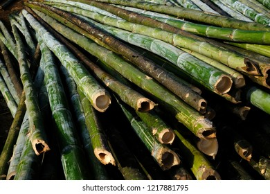 Green bamboo cutting pipe for use general, Pile of bamboo stalks. Bamboo poles and sticks for construction work, Bamboo materials and background in construction site
