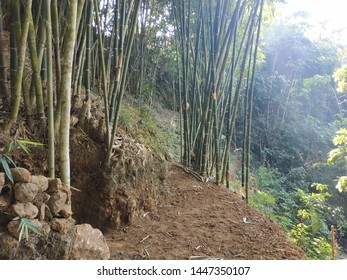 green bamboo forest - nature detail