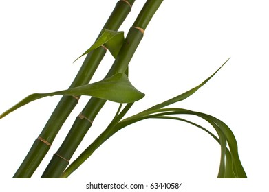 green bamboo isolated in white
