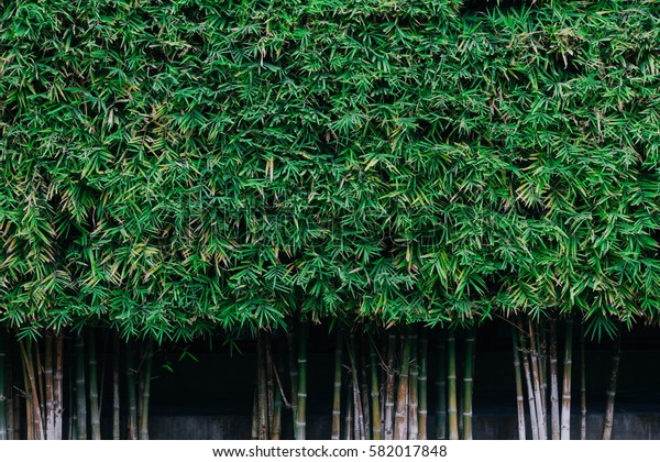Green bamboo leaf background, nature texture