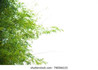 Green bamboo leaf on white background.