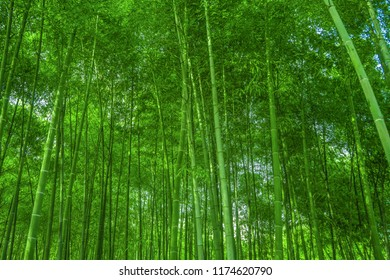 Green bamboo leaves background material