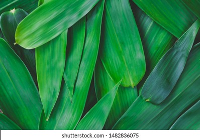 The green bamboo leaves have space for text or backgrounds.