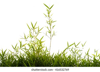 Green bamboo leaves isolated (against white sky)