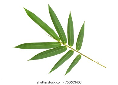 Green bamboo leaves pattern isolated on white background,back view