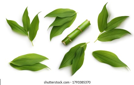 Green bamboo leaves set isolated on white background