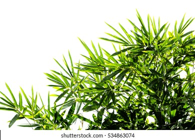 Green bamboo leaves with white background.