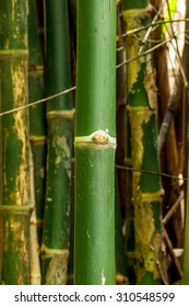 Green bamboo in nature.