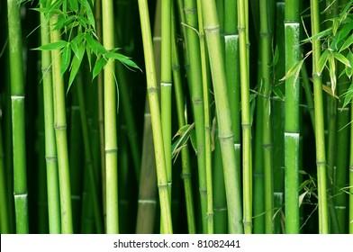 green bamboo stems close up