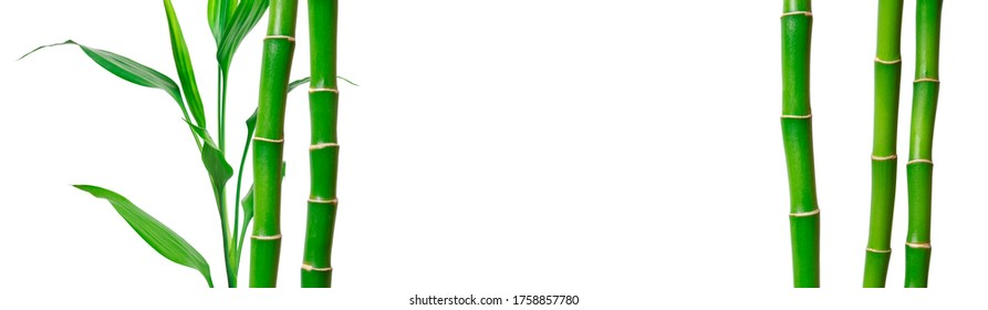 Green bamboo stems and leaves on white. Natural banner with copy space for organic product